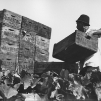 worker with crates.JPG