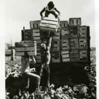 workers crates001.jpg